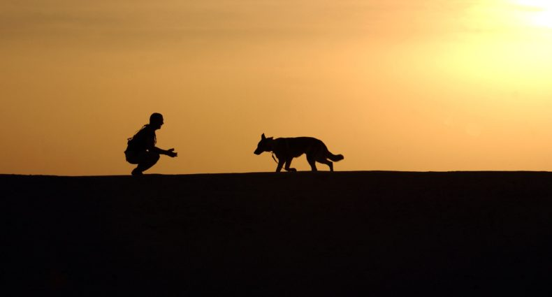 Ask Kurt: How to Find Your Lost Dog