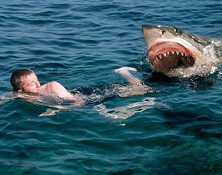 5 Ways To Repel A Shark Attack