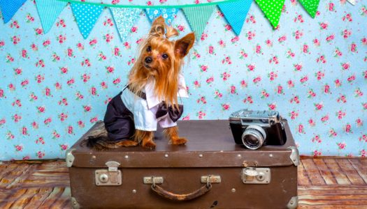 How to Make Airline Pet Travel Safer